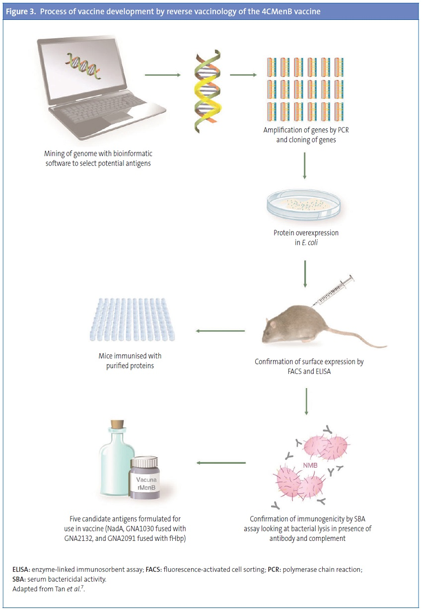 Figure 3. Process of vaccine development by reverse vaccinology of the 4CMenB vaccine