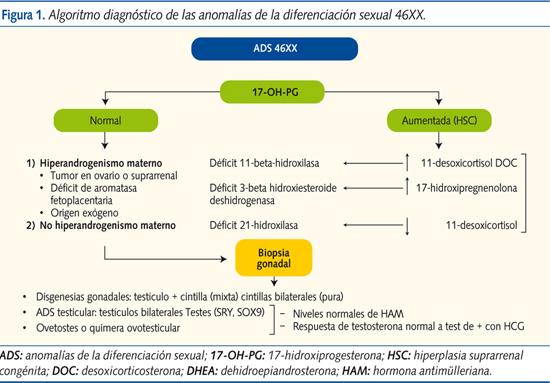 esteroidogenesis gonadal
